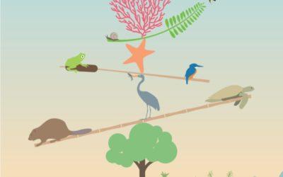 2 de febrer – Dia Mundial de les Zones Humides