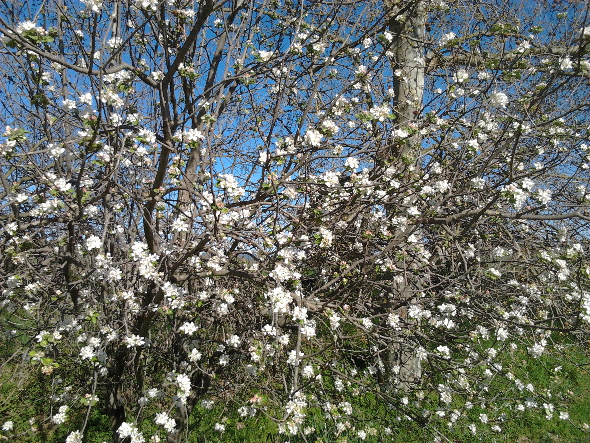 Les flors, com els i les joves del Tresca, són boniques en si mateixes.
